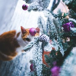 A christmas image of a cat and a christmas tree